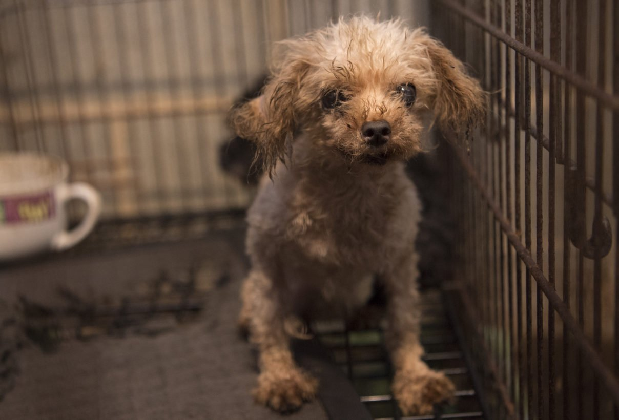 #Florida and #Georgia lawmakers made a shameful attempt to protect puppy mills: https://t.co/bRkk7vb4Va https://t.co/xbM4iTOW72