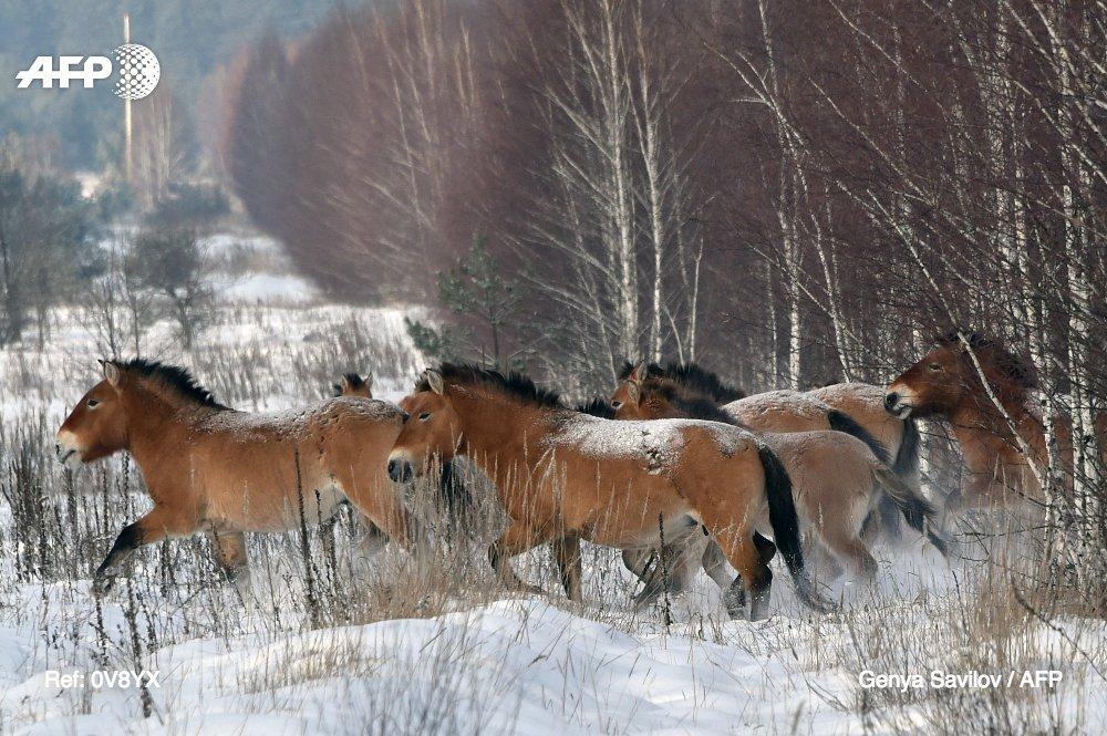 Il n'existe plus de chevaux sauvages sur Terre, annoncent des chercheurs https://t.co/BMBWfhSdCg #AFP