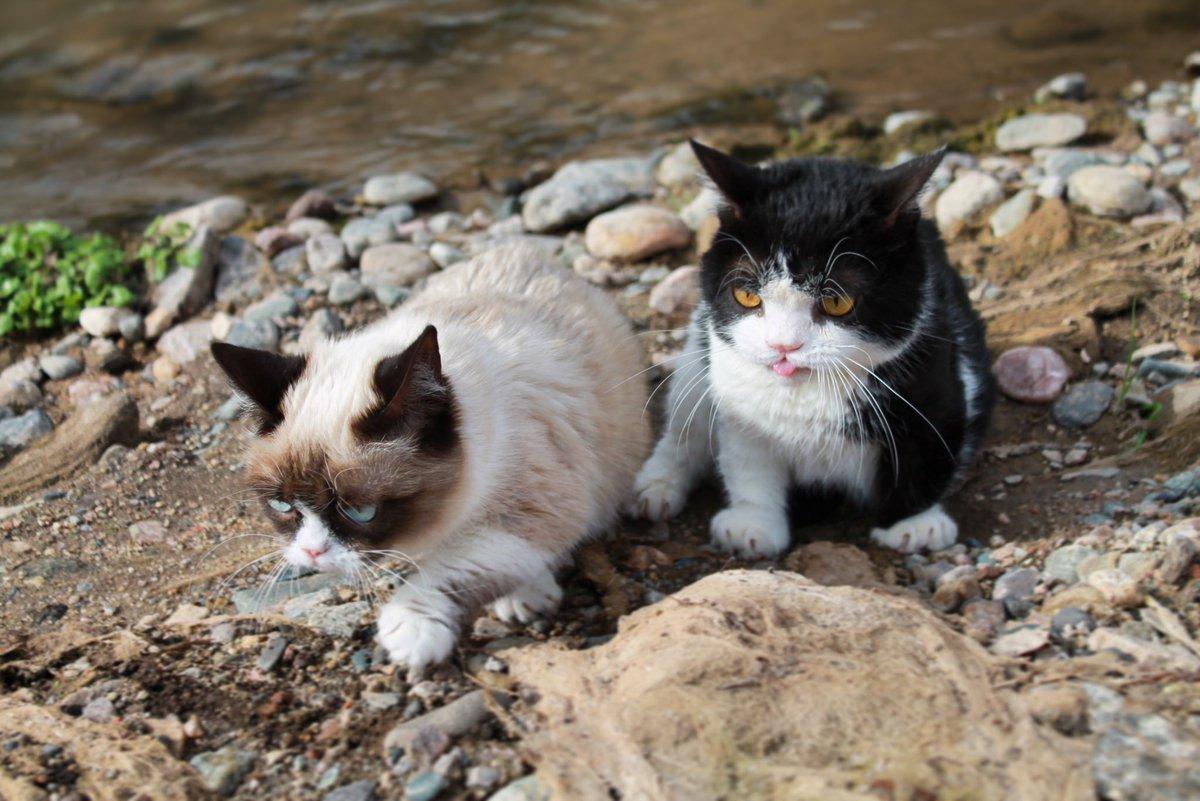 Grumpy Cat (@RealGrumpyCat) on Twitter photo 2018-03-01 19:08:28