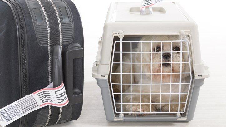Emotional support dog bites child on Southwest flight https://t.co/hZEDMrTc0U