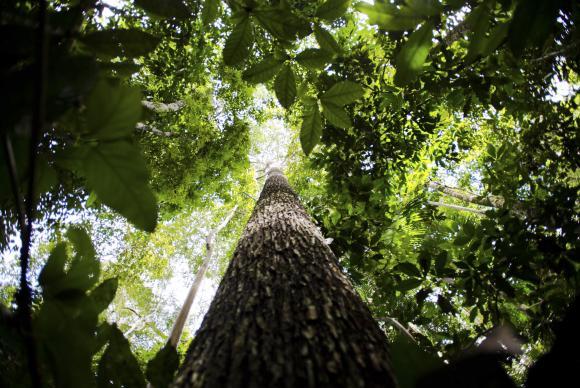 Código Florestal: resultado das ações no STF será conhecido na semana que vem https://t.co/IMp7lQDAcT 📷 Marcelo Camargo/Agência Brasil @RadioagenciaEBC