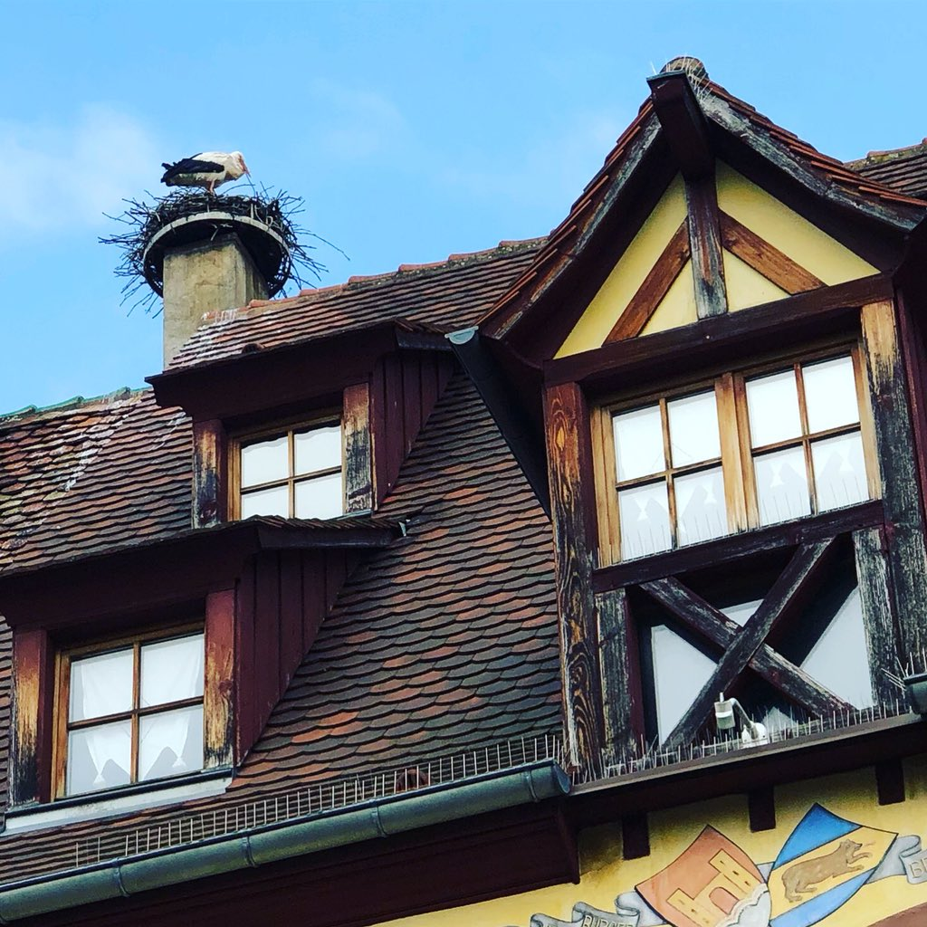 Stork in his nest on an Alsace roof https://t.co/usZhgZZ8vB