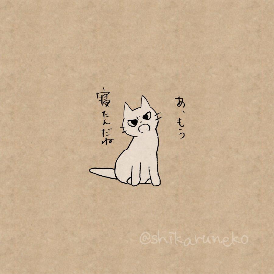 寝る前に布団でスマホをいじる人を叱ってくれる猫