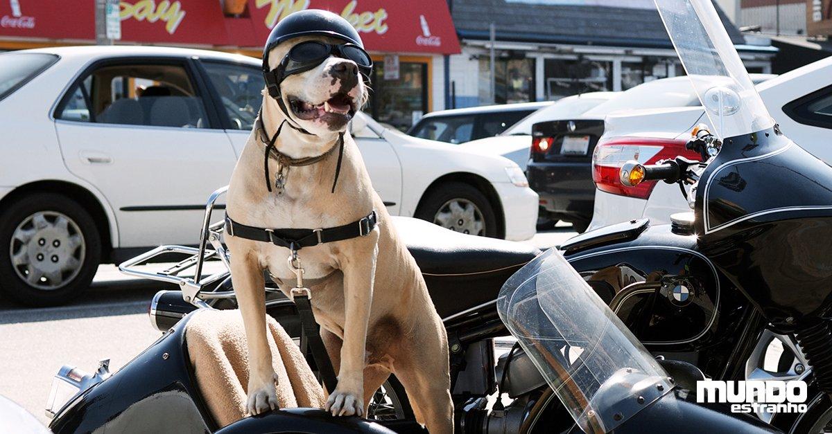 #BlogMeME Cachorro precisa dar uma paradinha durante viagem de moto: https://t.co/JcxJRCsZoO
