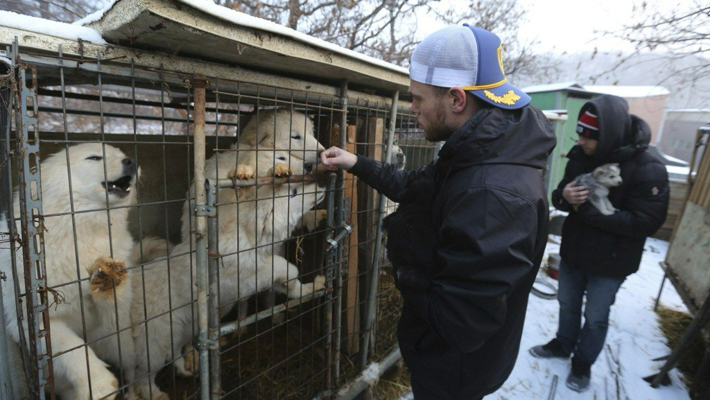 'Heartbroken' US Olympic medalist visits South Korean dog meat farm https://t.co/MSeMbOTEHe