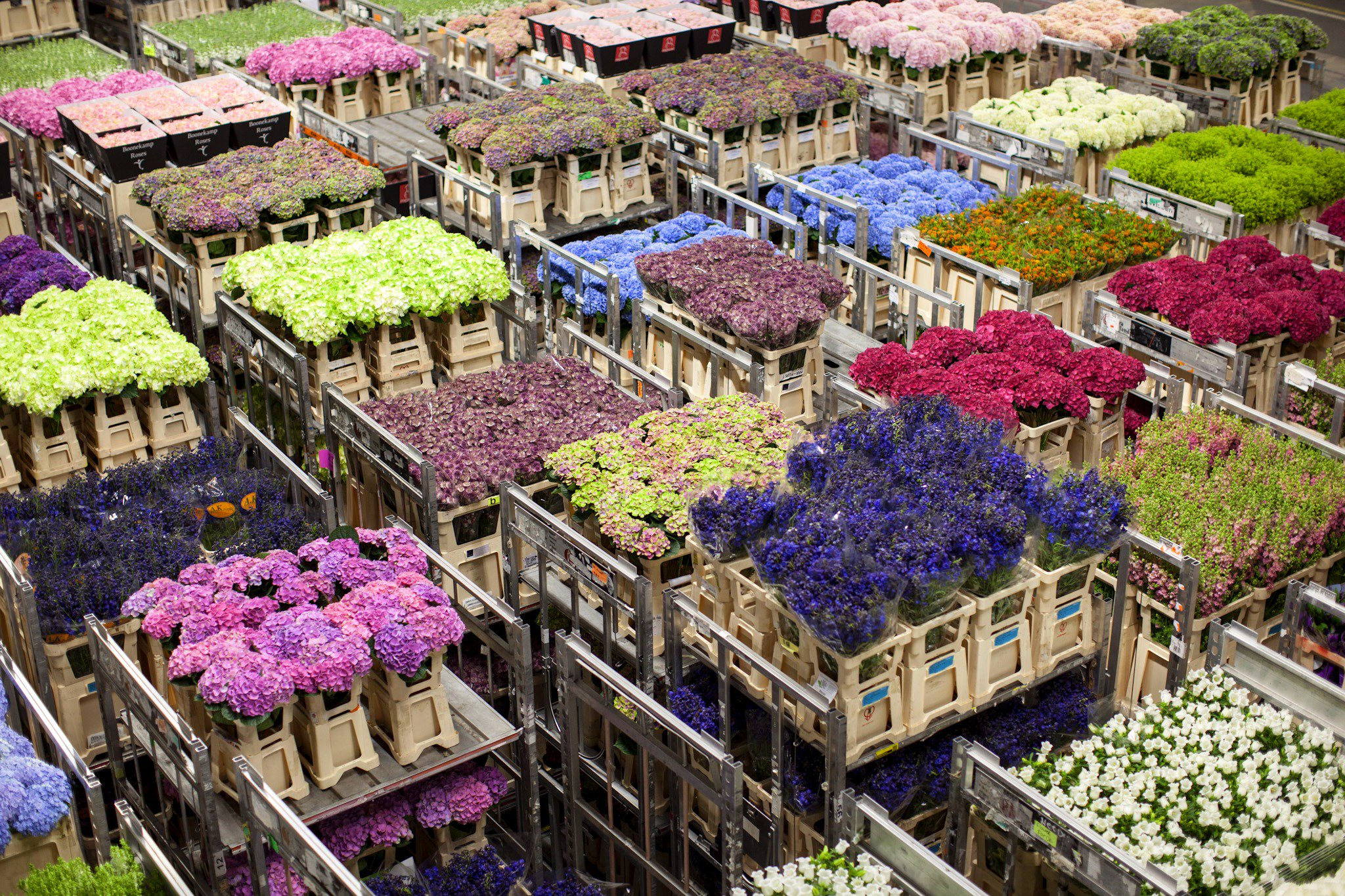 Цветы оптовые базы москва