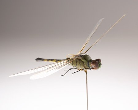 ICYMI: CIA #Museum Artifact of the Week: Insectothopter   It's a dragonfly! It's a listening device! It's Insectothopter!  Developed in the 1970s, our micro unmanned aerial vehicle (UAV) was the 1st flight of an insect-sized vehicle.  https://t.co/nJlc2KC7Ni  #engineersweek