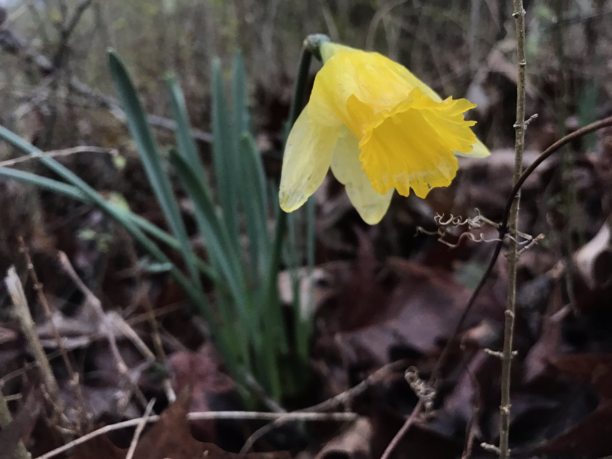 Reed Timmer On Twitter Waterlogged Daffodil In Hot Springs