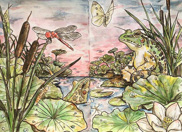 『じゅえき太郎の昆虫採集ぬりえ』のカエル見開きページを塗ってみました。夕焼け空はやはり難しかったです🐞。参考になりましたら幸いです。  #昆虫採集ぬりえ