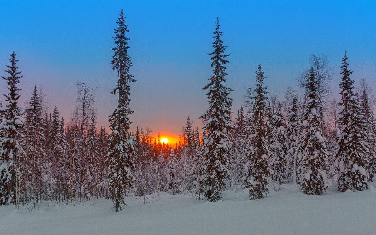 картинки зимний снежный коми лес появилась