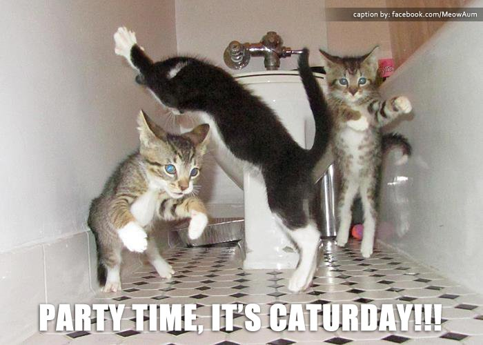 @Dafluffarooniez Happy Caturday furriends!