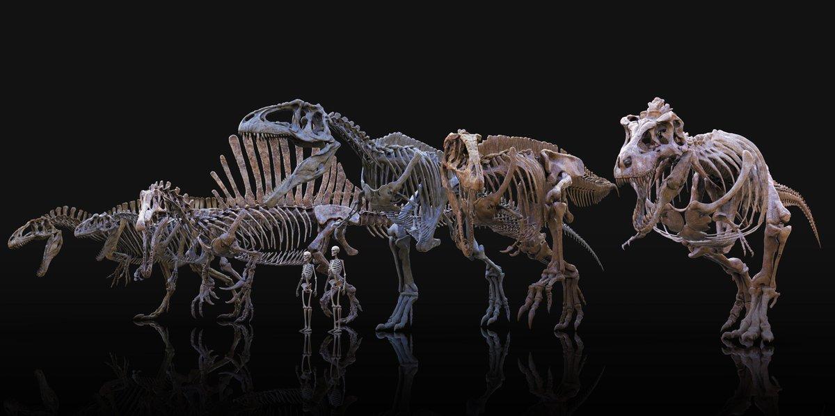 1200 x 598 jpeg 90kBTyrannosaurus