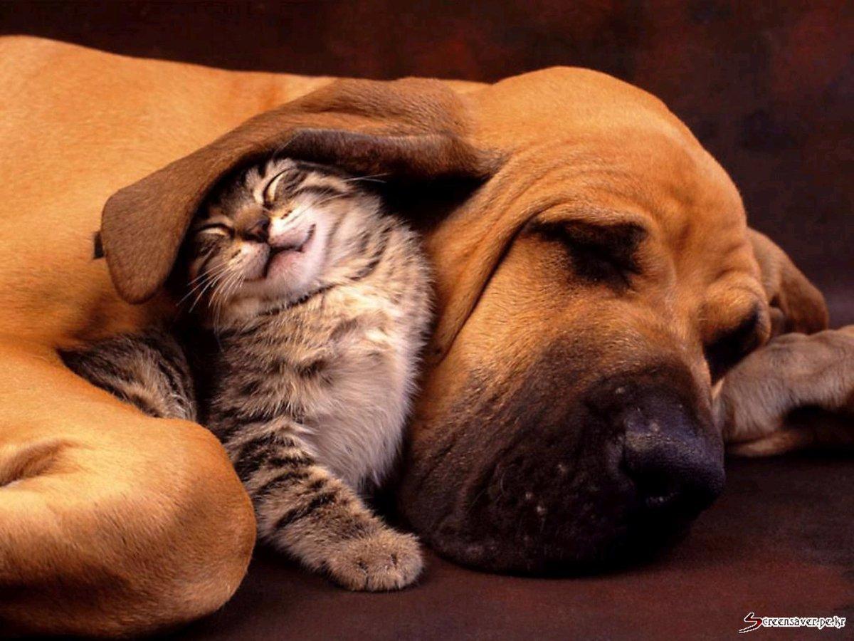 Hero Wallpaper On Twitter Cute Dog And Cat Tco 20Zc8YrG85 Nokia Cats
