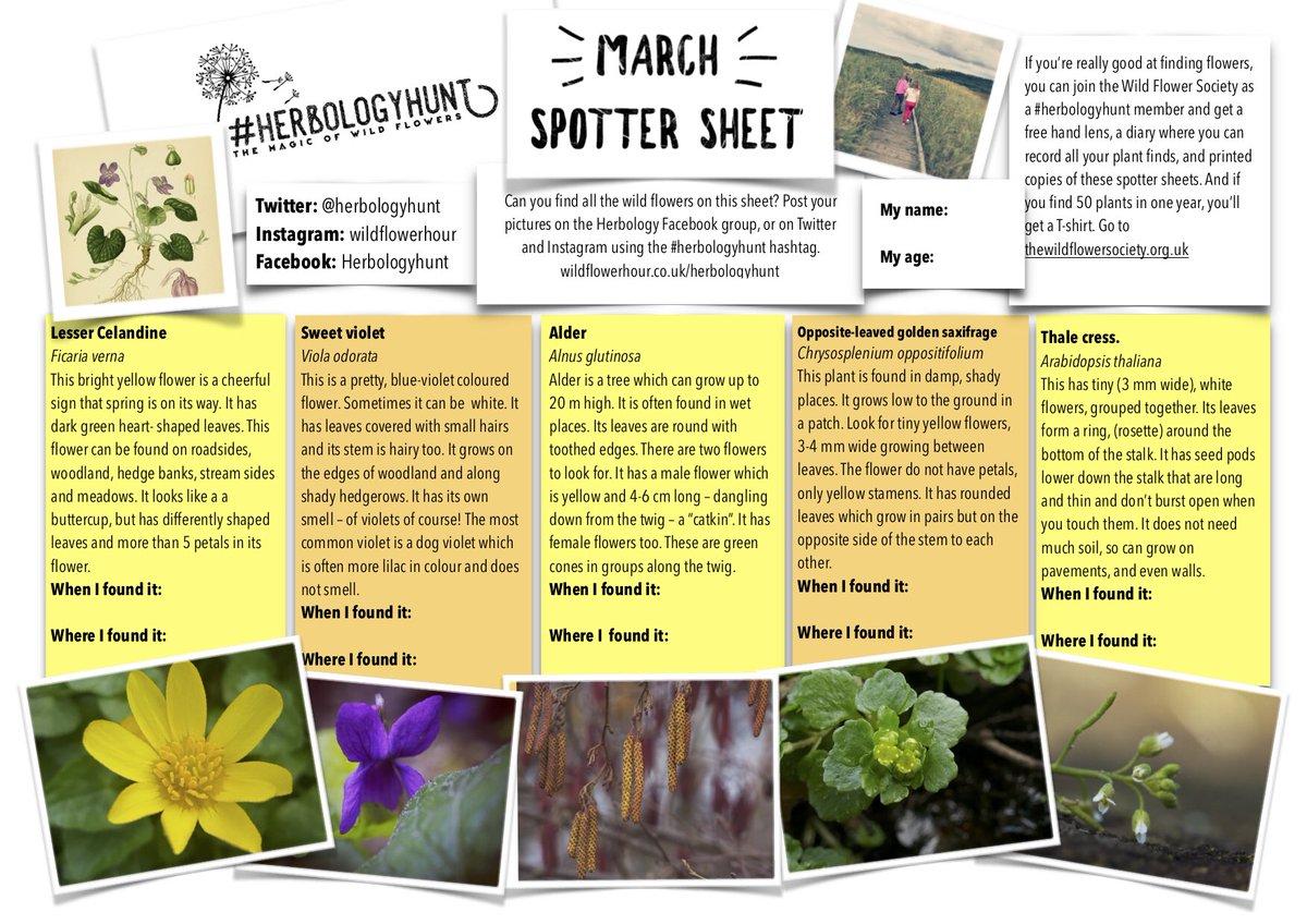 Small Yellow Flowers Names Choice Image Fresh Lotus Flowers