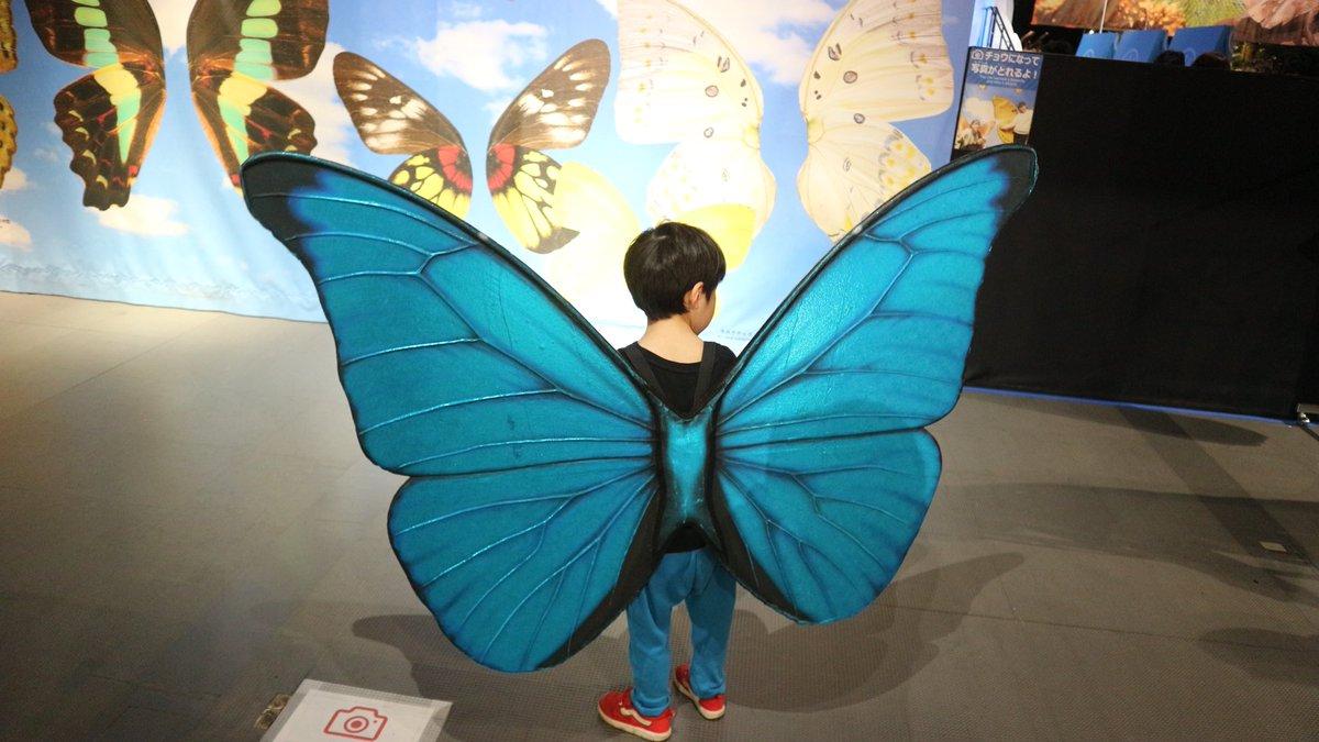 日本科学未来館でやってる「生きものになれる展」に是非みんな行って欲しい。子供のこんな姿見たらもう…もう…可愛いしか出てこないから!! #ダンゴムシ  #モルフォチョウ