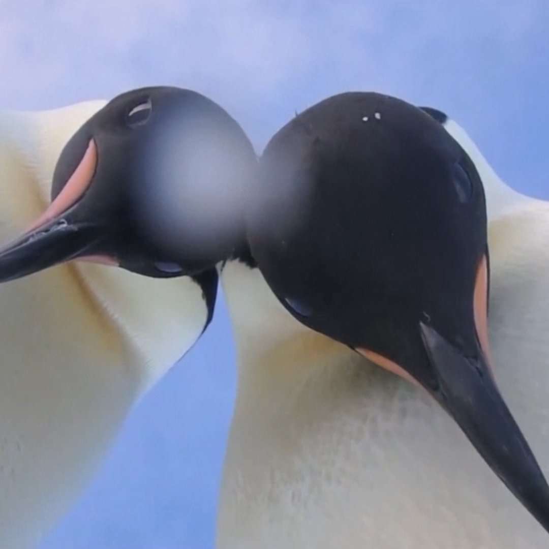 Everyone's loving these penguins who have better selfie game than you do https://t.co/SXIm43EWnv https://t.co/bsXNqVdUUg