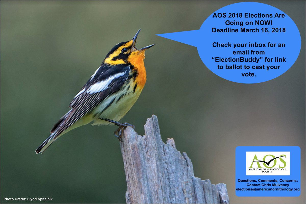 Vote now! AOS 2018 Officers and Elective Councilors Election - Check inbox for link to official ballot Polls close: MARCH 16 #ornithology bit.ly/AOS2018Election