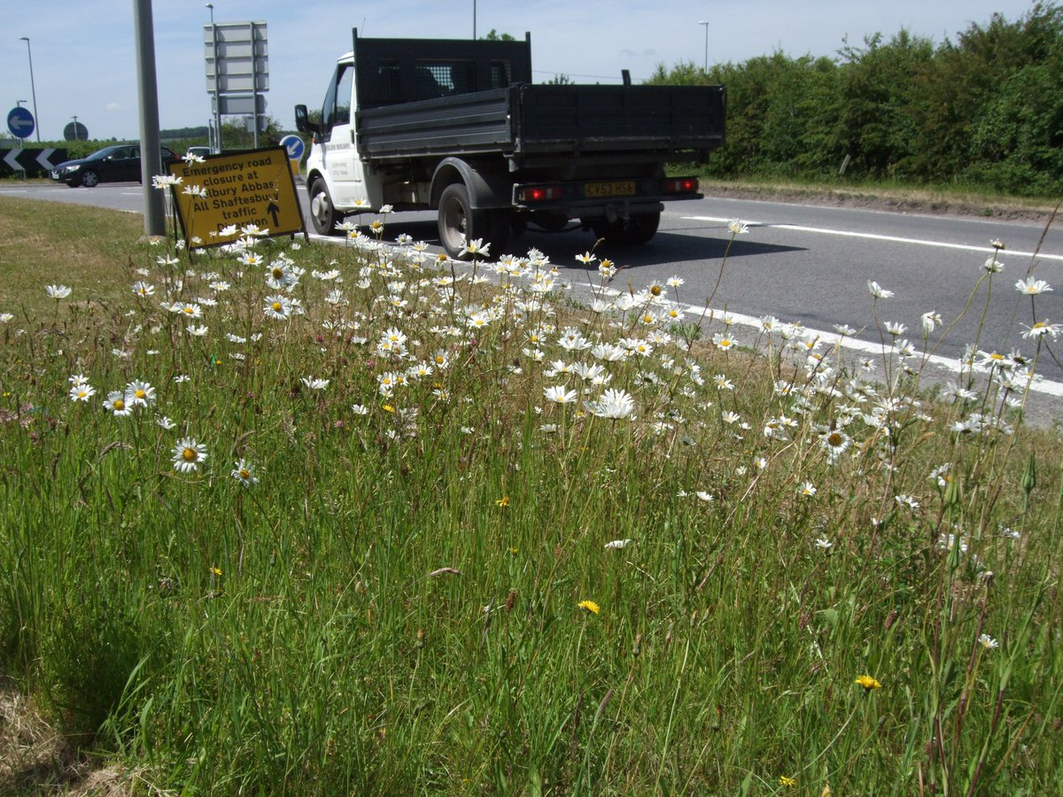 Litter Free Dorset On Twitter Do You Know Where All The Flowers