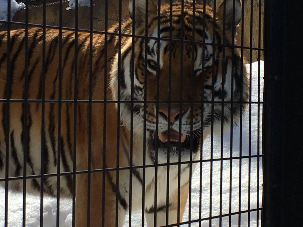 撮った虎の写真見てたら ウインクしてたwwww https://t.co/mw1...