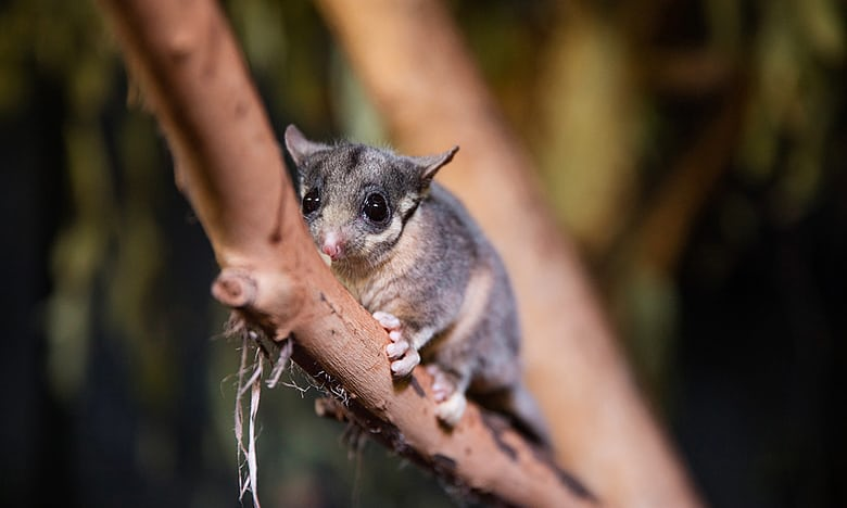 Australia has 1,800 threatened species but has not listed critical habitat in 10 years: ow.ly/8nfs30iPZES @guardian