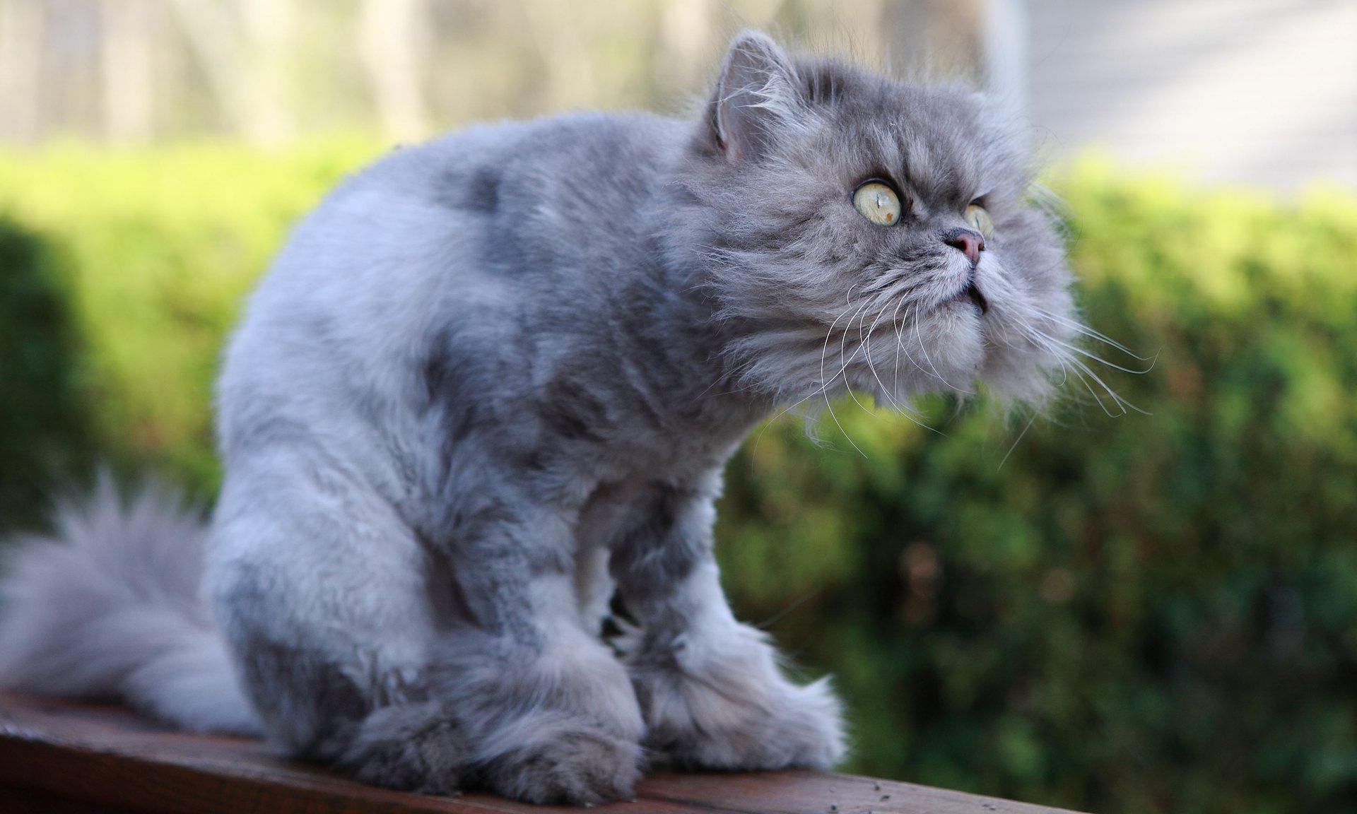 Смешные картинки с надписями без котов, днем