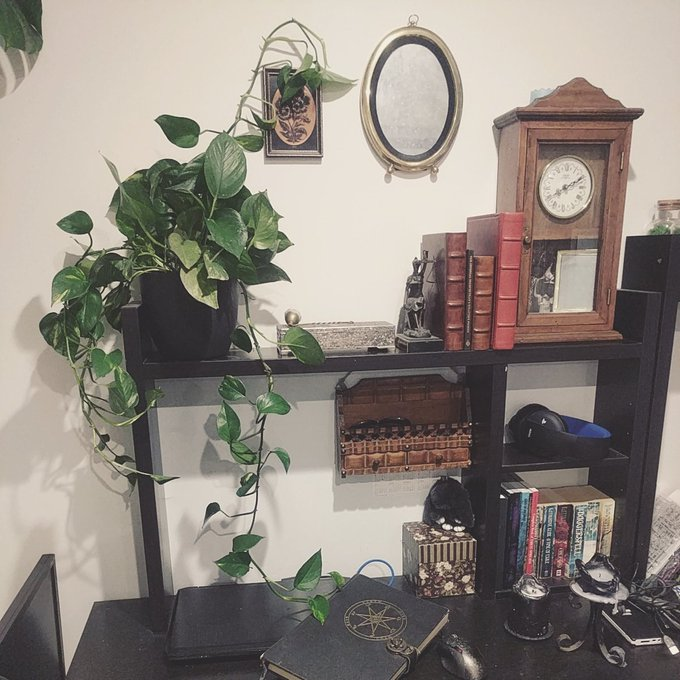 Ok pothos, calm down. Tell me where you want to grow mate, you're making desk work difficult XD https://t
