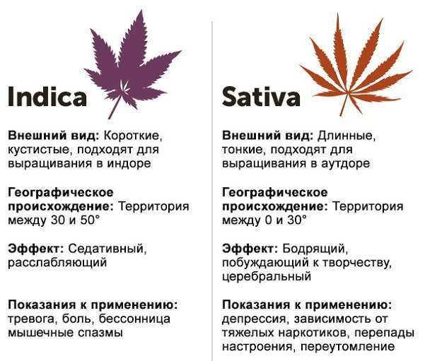 Подскажите фильмы про марихуану когда высаживать марихуану