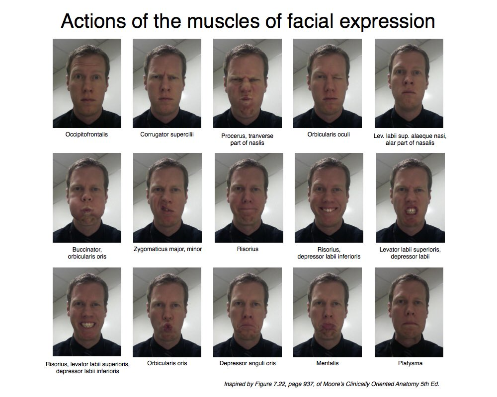 Recommend Action of facial muscles