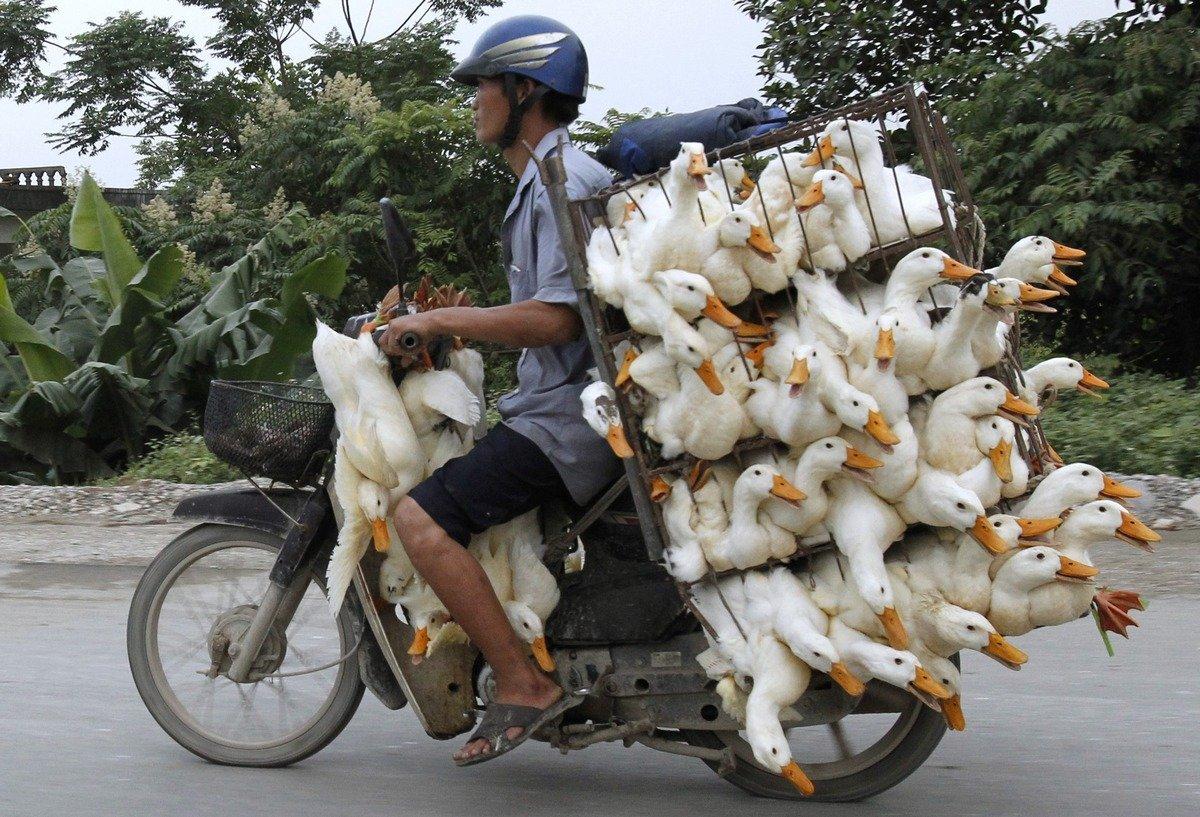 Вьетнам приколы картинки