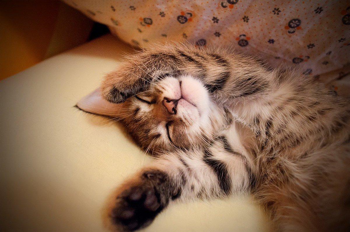 множество открытка как спалось милый умеет разочаровывать