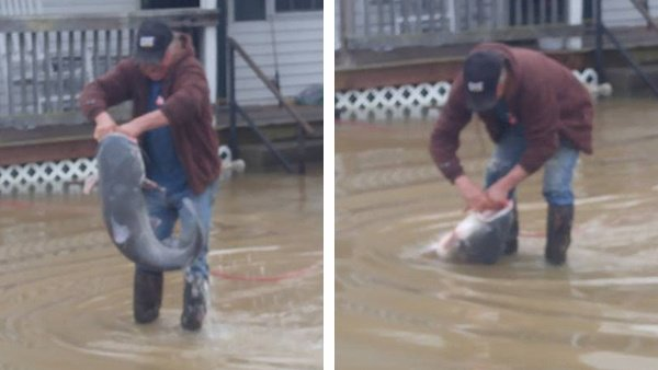 Kentucky man catches colossal catfish right in his front yard https://t.co/BA3B7grPDH