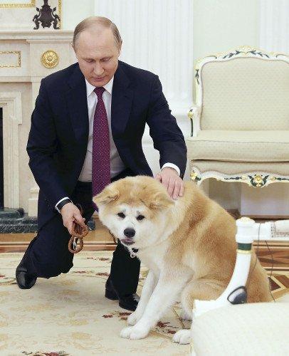 平昌五輪フィギュアスケート金メダルのザギトワ選手がおねだりしたことで再注目された秋田犬ですが、今ロシアでは空前の秋田犬ブームなんだとか。