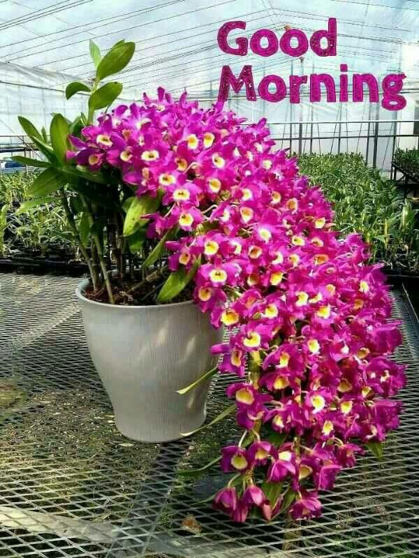 Dorable Good Morning With Beautiful Flowers Inspiration