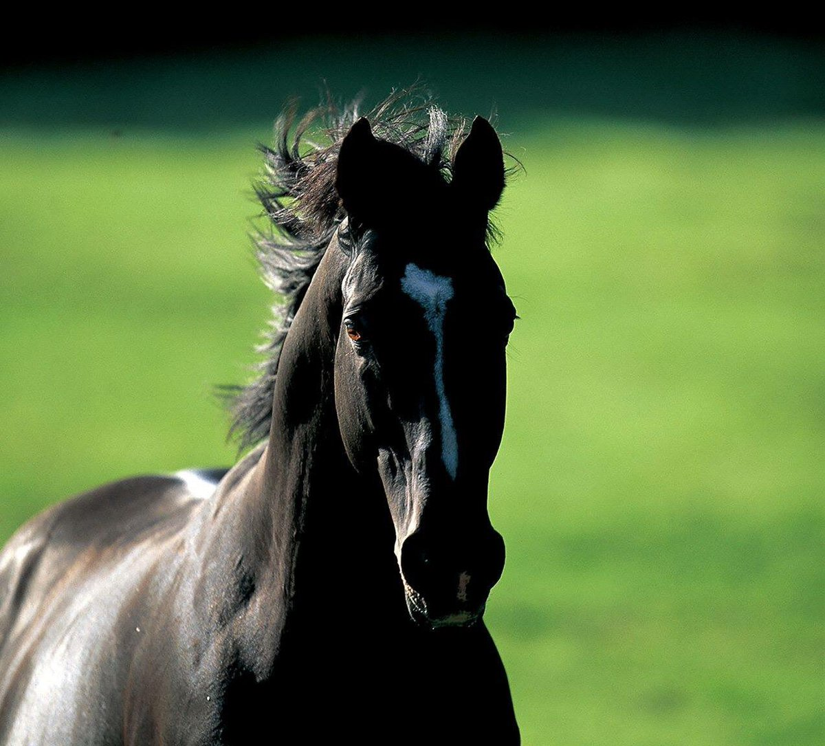 Remembering the #KentuckyDerby winner and leading sire in Japan #SundaySilence #champion #legend #sire #Thoroughbred #racehorse<br>http://pic.twitter.com/3apWHrBpJr