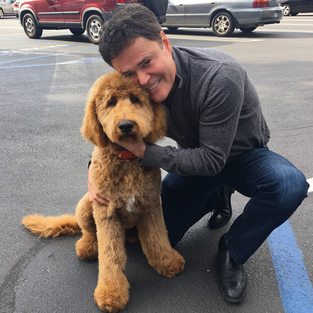 Debbie and I picked up Bohdi from @PetSmart after his haircut. I wish I looked that cute after a haircut. https://t.co/7JmSD5CG3K