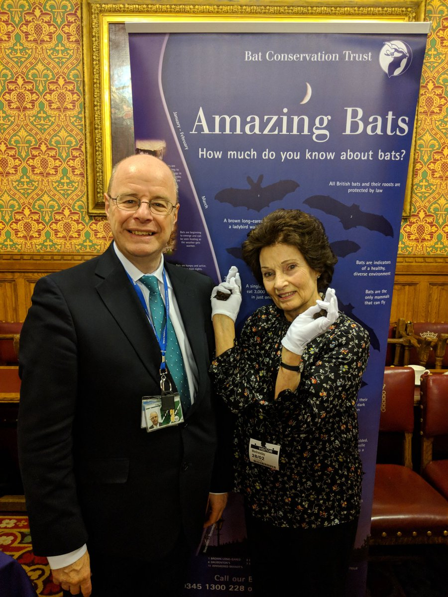 Batlady twitter search the bat species champions have met the wonderful batlady jenny clark mbe thank you peternorthdevon and helenhayes for speaking up for wildlife and biocorpaavc