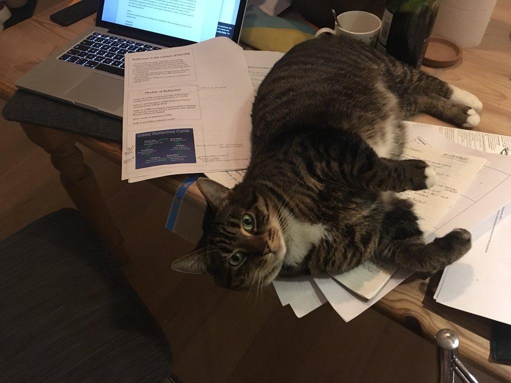 Homework helper worksheets