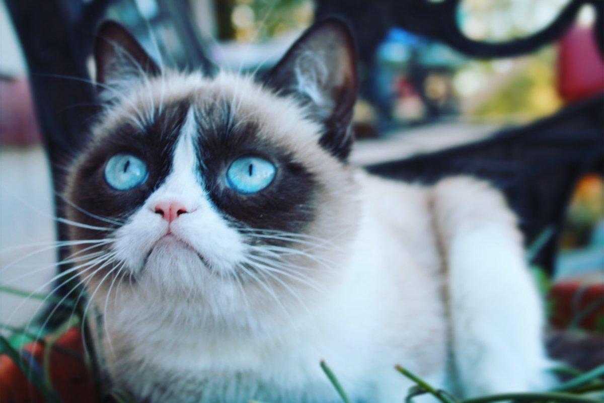 Grumpy Cat (@RealGrumpyCat) on Twitter photo 2018-03-01 19:07:54