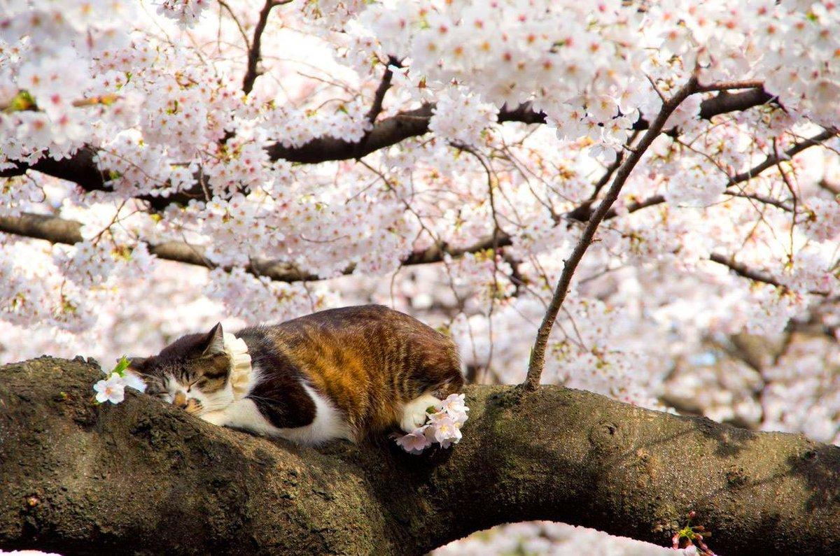 котик возле дерева скачать