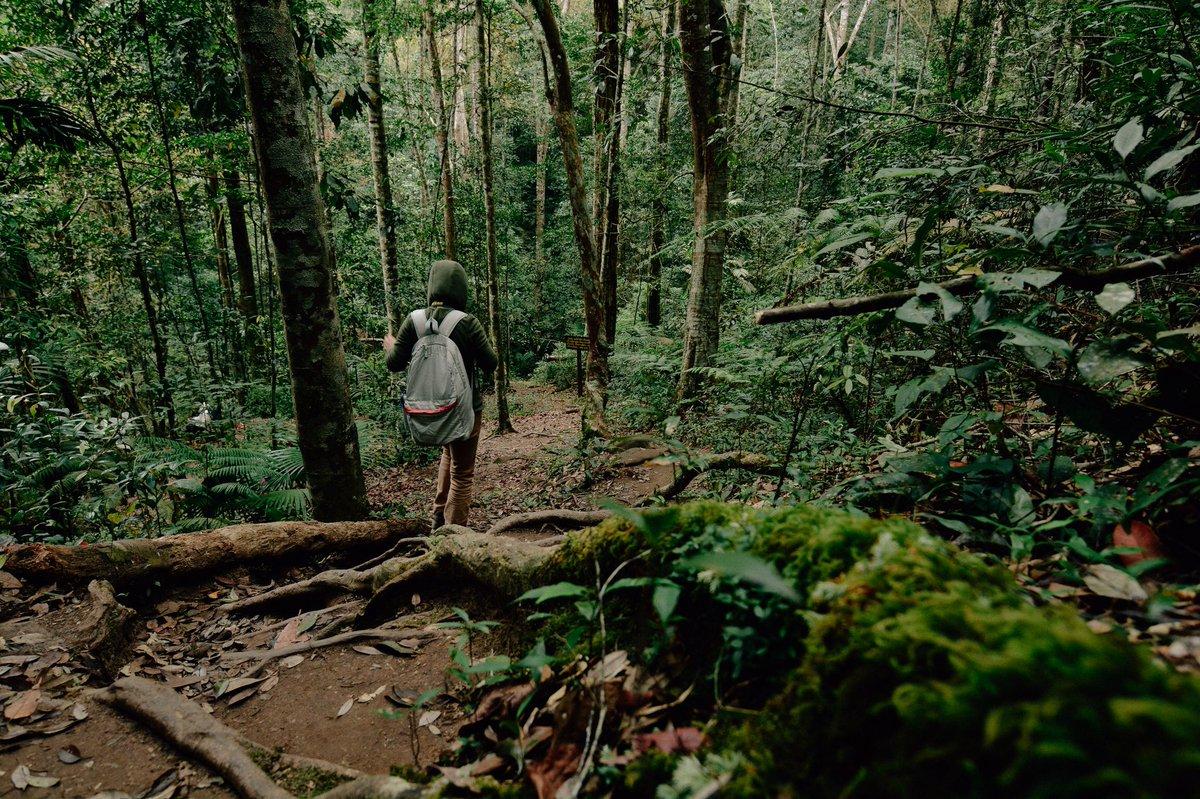 Hiking with mom  Phu Kradueng National Park  เย็นๆชื้นๆ #ภูกระดึง จ.เลย #ReviewThailand <br>http://pic.twitter.com/D9Oiq0JE6C
