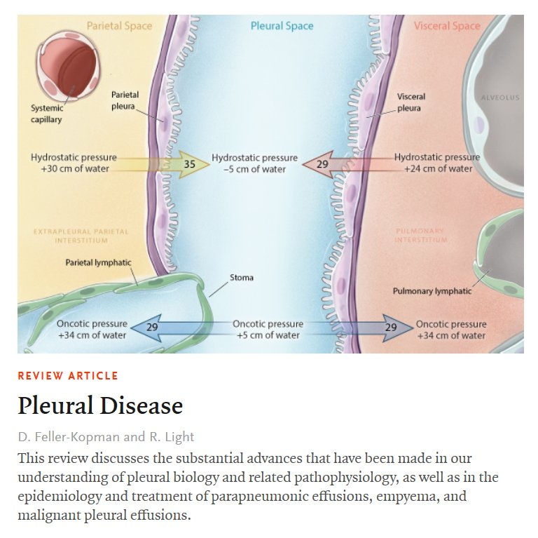 Nejm On Twitter The Pleural Space Is Defined By The Visceral