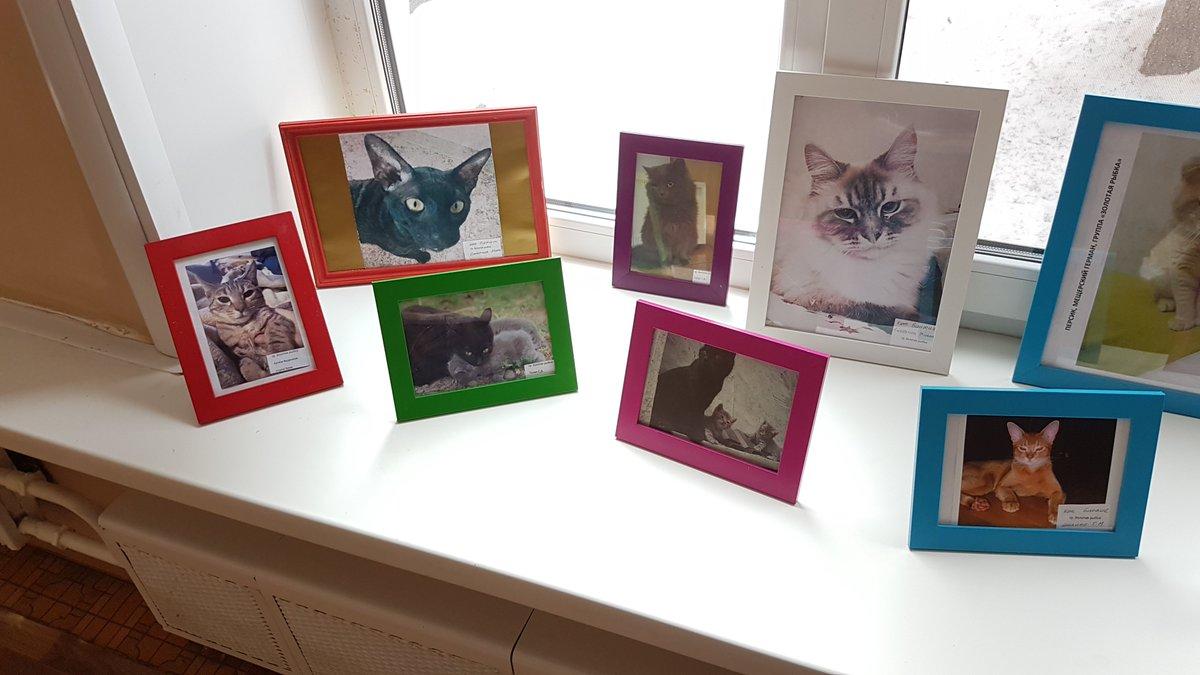 Конкурсы фотографий домашних животных