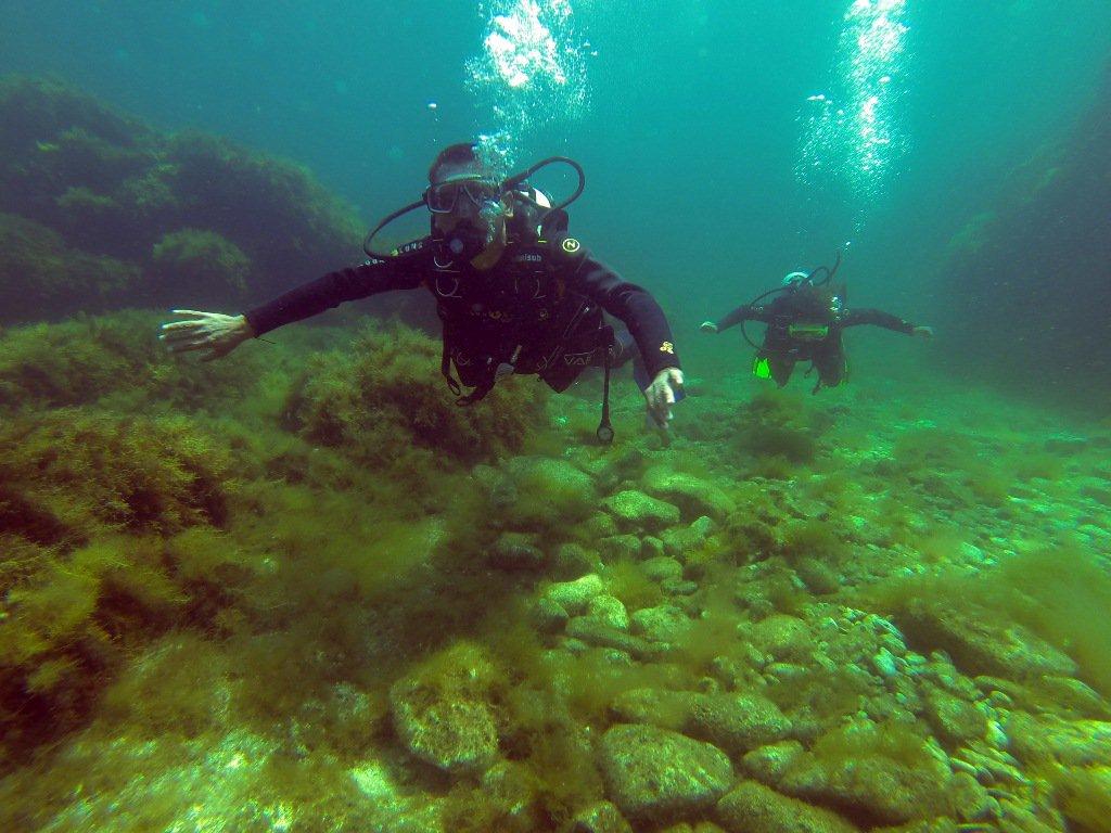 Подводный мир тарханкут крым фото