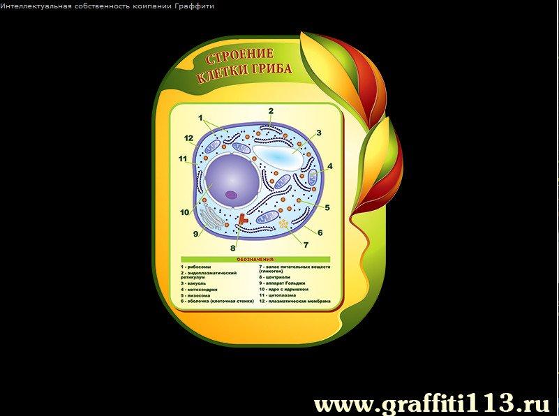 Информация для стенда по биологии картинки