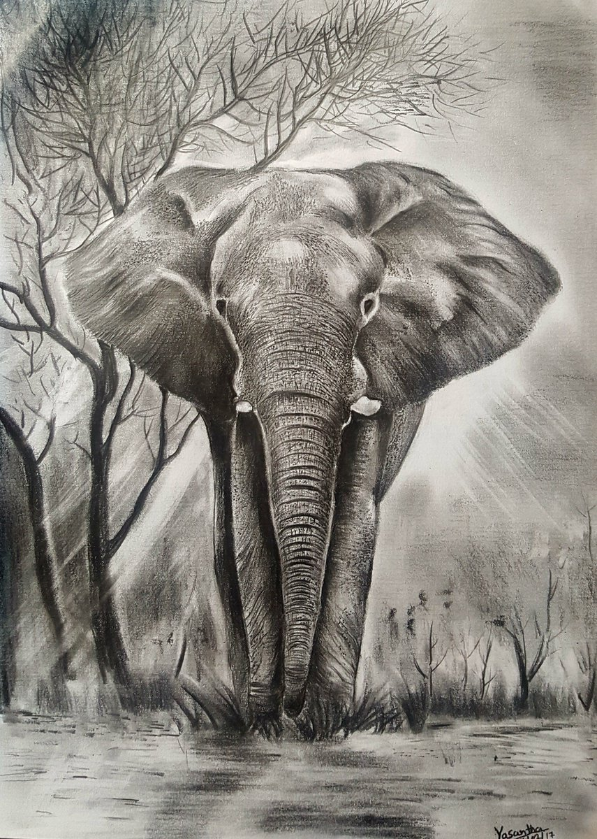 We love this pencil sketch of an african elephant by yasantha premalal all the way from sri lanka fanfriday elephants art talentpic twitter com
