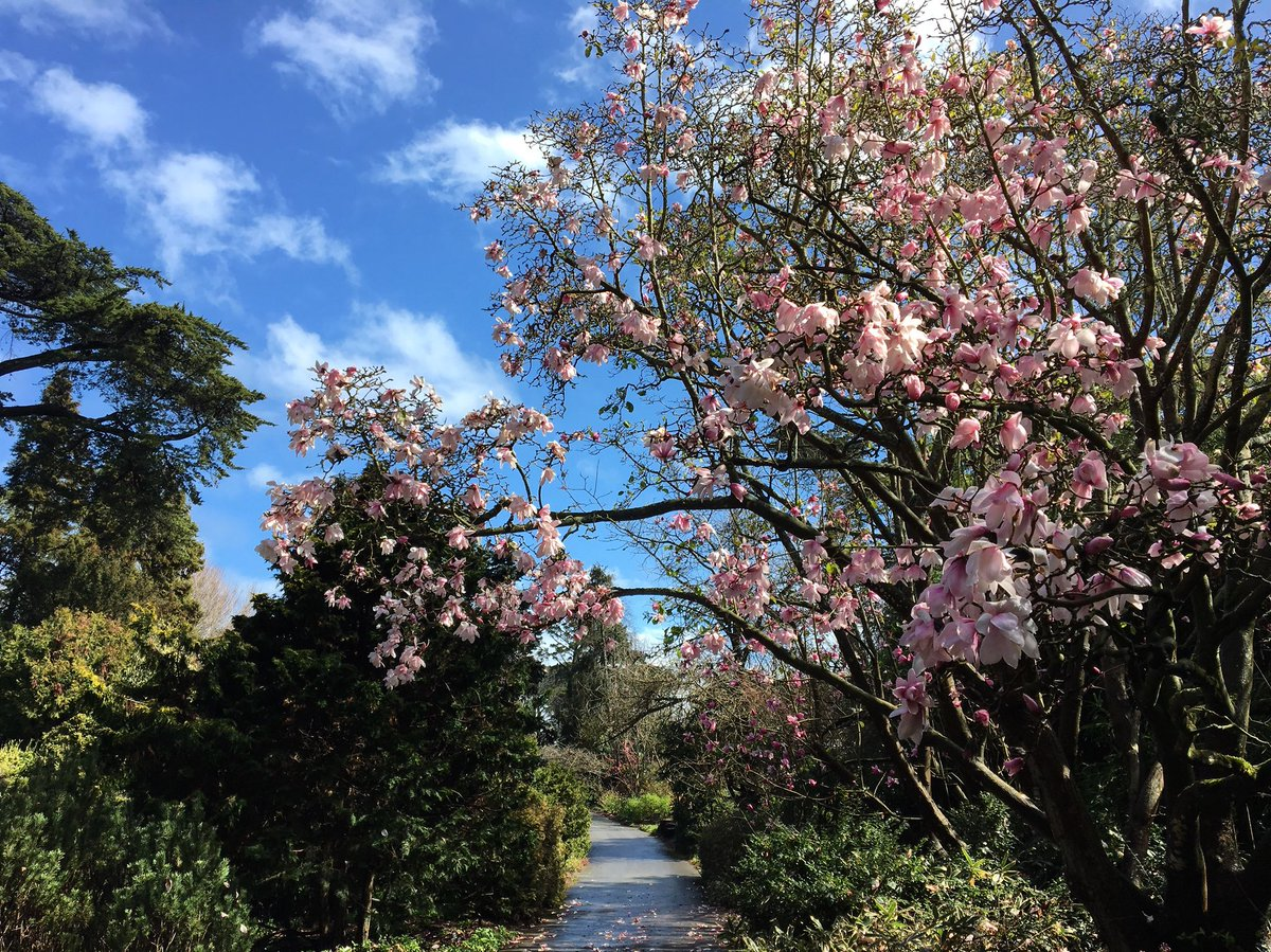 Pic.twitter.com/YXUA7E8vJH U2013 At San Francisco Botanical Garden