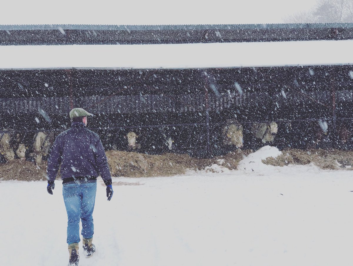 The cows are happy to be indoors this weather #snow #irishfarming #beastfromtheeast #snowing❄️