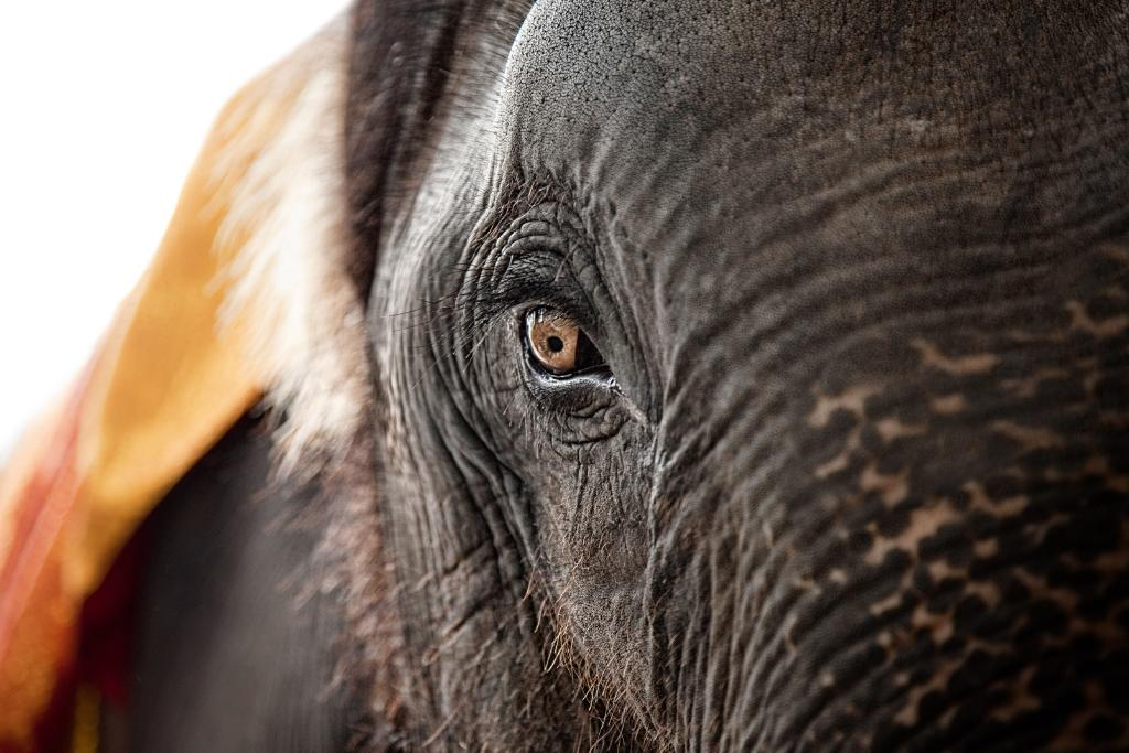 Growing threat of poaching requires innovative solutions to protect elephants and rhinos. Learn how EPI-USE uses the #SAPHANA technology to approach this problem.