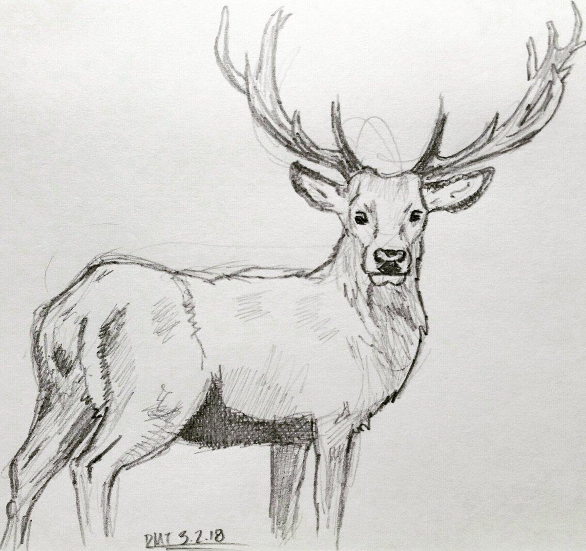 Deer pencil sketch sketchbook dailydrawingchallenge dmt 2018pic twitter com aiyrtbkmik