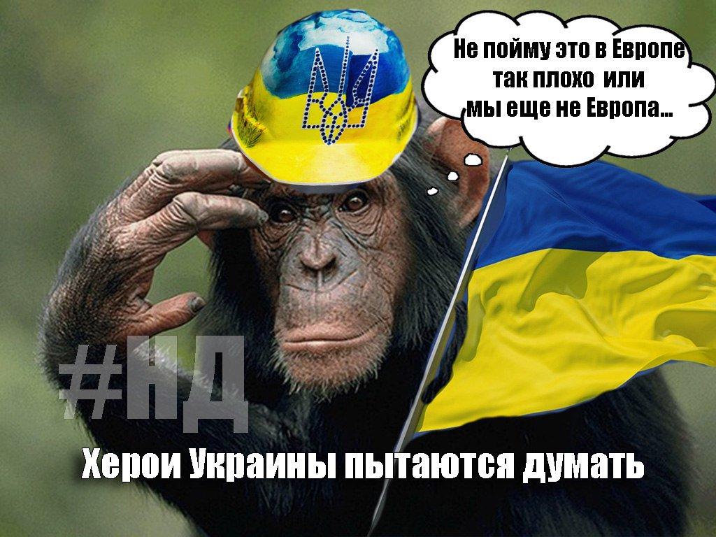 Удостоверение сотрудников гур мо украины фото поверхности